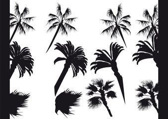 The image of palm trees and their silhouettes