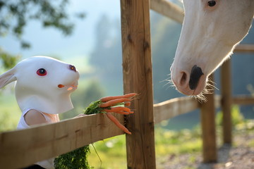 we belong together, little girl with a rabbit mask feeding a painthorse with carrots