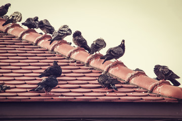Group of pigeons on old red roof in cloudy day (selective focus) ; vintage style