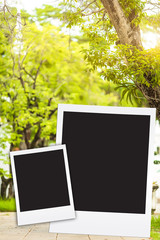 photo frame on big tree blackground blur