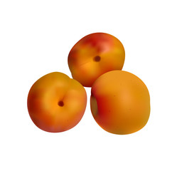 orange apricots isolated on white - vector