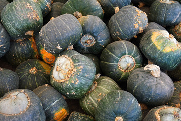 piles of green pumpkin in farm during harvest season