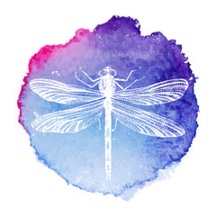 hand drawn dragonfly on watercolor background