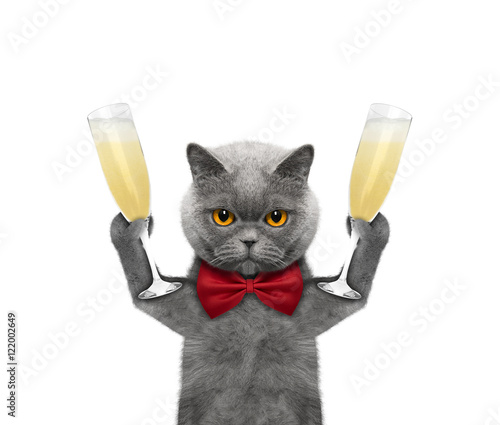 Cat on a holiday with a glass of champagne