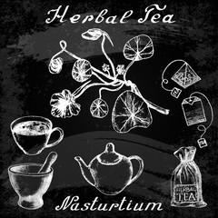 Nasturtium hand drawn sketch botanical illustration