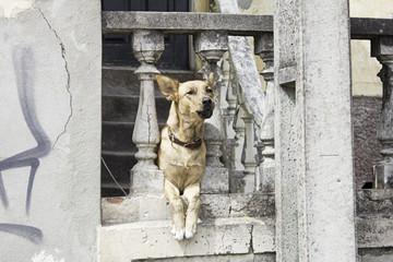 Dog sitting home
