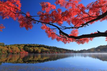 紅葉が覆う湖