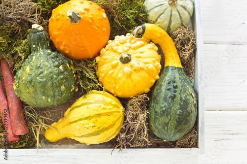 Herbst und Halloween Dekoration mit Zierkürbissen Stock