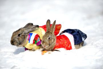 한복입은 토끼들의 눈밭산책