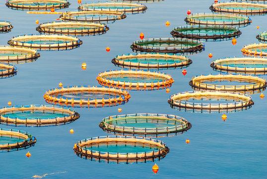 Fish farming in Myrtoan Sea