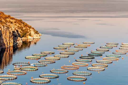 Fish farming near Epidaurus, Greece