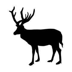 Black silhouette of deer on white background. Vector illustration.