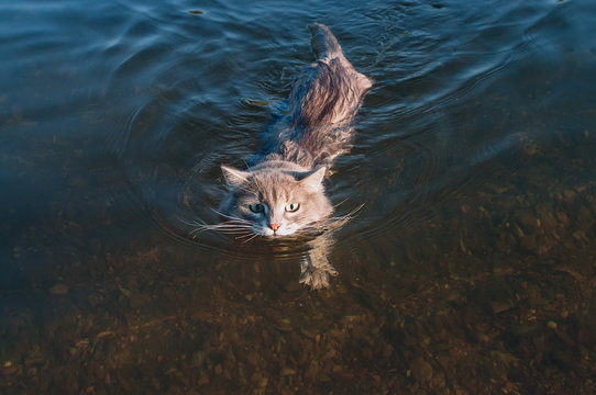 gray mustache cat floating on the river