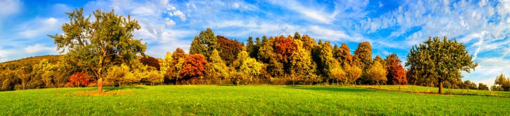 Wiese mit bunten Bäumen und blauem Himmel im Herbst, Panorama