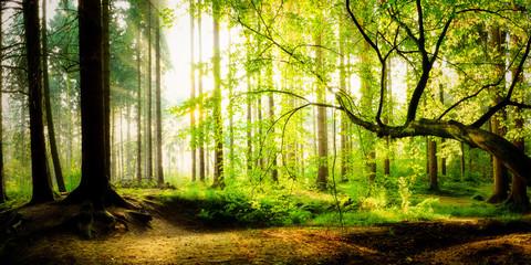 Recess Fitting Panorama Photos Sonnenaufgang im Wald an einem verträumten Morgen im Herbst