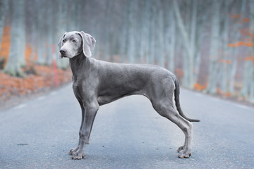 Side View Of Dog In Forest