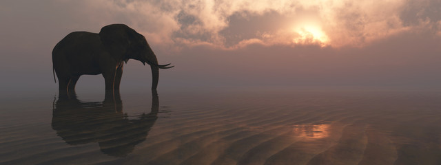 Deurstickers Olifant elephant and sunset