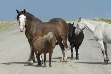 Horses at Bonavista Peninsula, Newfoundland, Canada