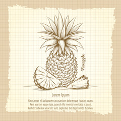 Hand drawn pineapple on vintage notebook background. Retro style poster vector illustration