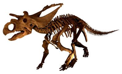 Dinosaur fossil (complete skeleton )