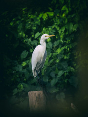Image of egret on tree branch. in forest, Thailand. Vintage Filt