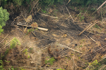 forest destruction in thailand form Aerial view