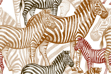 Seamless vector pattern with African animals. Colored Zebra on a white background. Template to create fabric, Wallpaper, paper, textiles, curtains, design summer clothes in the style of Safari.