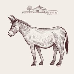 Donkey. Vector.