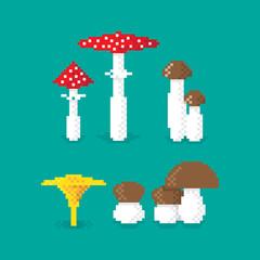 Various pixel Mushroom, set of, edible and poisonous. Illustration, pixel art design. Editable vector