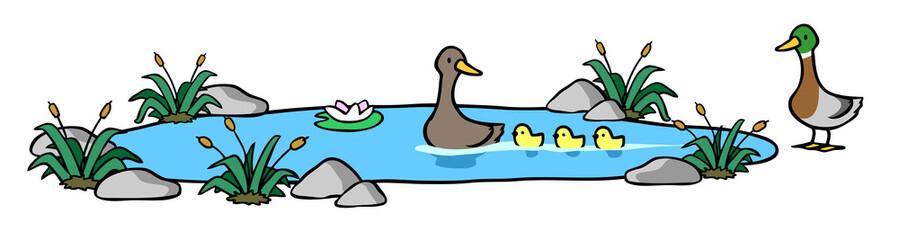 Enten und Küken schwimmen im Wasser