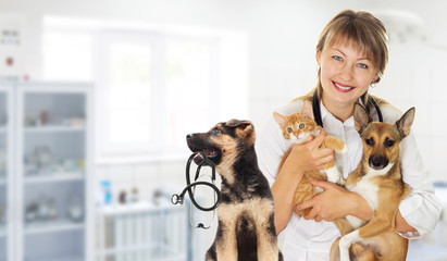 Veterinarian and Puppy and kitten and a stethoscope in the veter