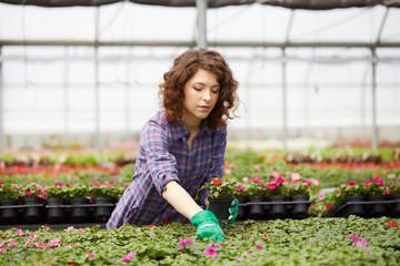 gardener taking care of flowers in greenhouse