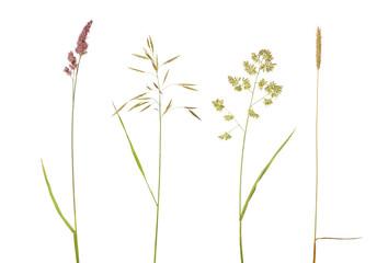 four isolated on white wild plants