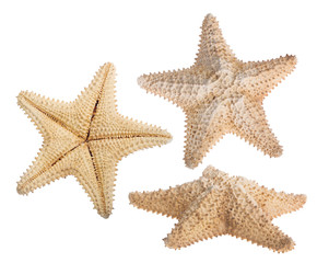 set of three beige starfishes isolated on white