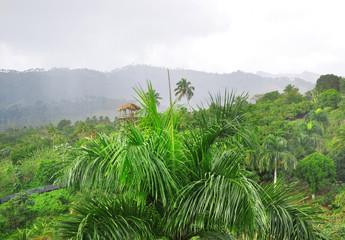 jungle at Dominican Republic
