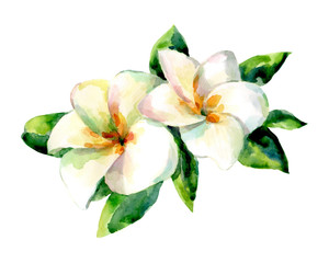 Watercolor illustration of exotic flower on a white background.