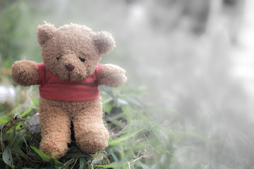 brown bear doll wear red shirt on natural background