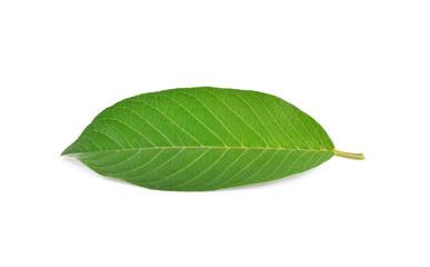 Guava (Psidium Guajava) leaf isolated on white background