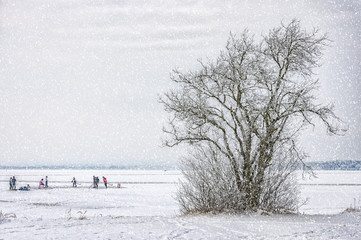 Winter Wonderland Frozen Lake