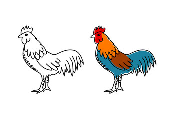 Rooster drawing on white background