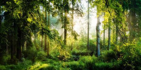 Fototapete - Sonnenaufgang im herbstlichen Wald, verträumte Szene in den Morgenstunden