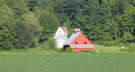 Red barn in the middle of corn fields