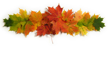 Autumn maple leaves that vignette, green, yellow, orange, and red. Room for copy space!