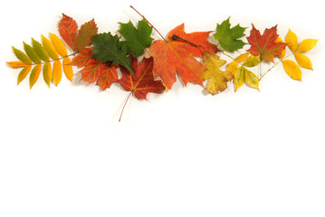 Collection of colorful Autumn leaves with room for copy space.