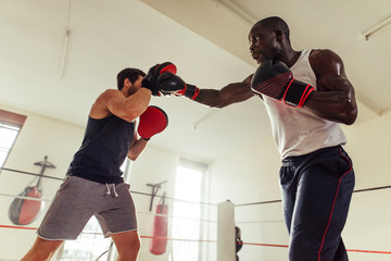 Athlete throwing punches at focus pads