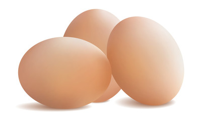 Fresh chicken eggs. Vector illustration .