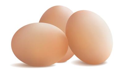 Fresh chicken eggs. Vector illustration .