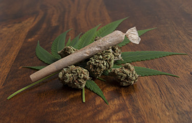 Cannabis sativa flower buds and leafs, with a rolled weed joint