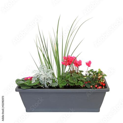 Jardini re de plantes d 39 automne stockfotos und for Jardiniere d automne