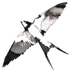 black and white monochrome painting with water and ink draw swallow bird illustration